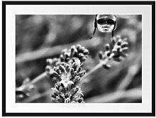 Gerahmtes Poster Biene auf Kriechender Günsel