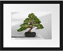 Gerahmtes Poster Bonsai Baum East Urban Home