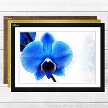 Gerahmtes Poster Flower Blue Orchid, Fotodruck Big