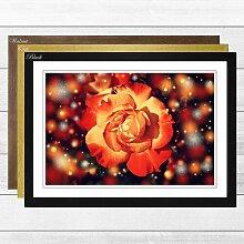 Gerahmtes Poster Flower Orange Rose (4),