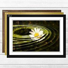 Gerahmtes Poster Flower White Daisy (4), Fotodruck