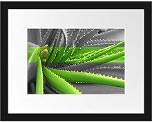 Gerahmtes Poster Grüne Aloe Vera Pflanze East