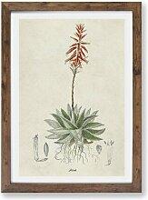 Gerahmtes Poster Illustration einer Aloe