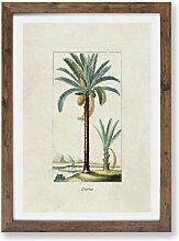 Gerahmtes Poster Illustration einer Dattelpalme