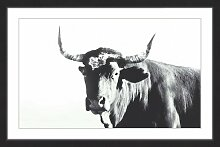 Gerahmtes Poster Stierkopf, Kunstdruck East Urban