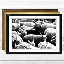 "Gerahmtes Poster ""The Black Sheep"", Fotodruck"