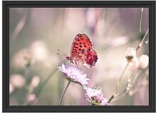 Gerahmtes Wandbild Bezaubernder Schmetterling