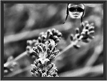 Gerahmtes Wandbild Biene auf Kriechender Günsel