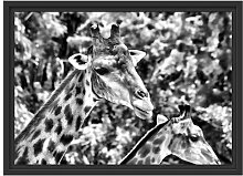 Gerahmtes Wandbild Giraffen
