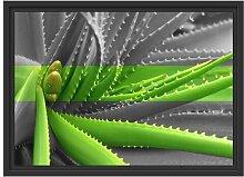 Gerahmtes Wandbild grüne Aloe Vera Pflanze