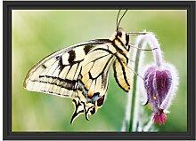 Gerahmtes Wandbild Schmetterling Schwalbenschwanz
