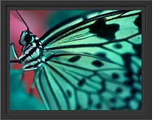 Gerahmtes Wandbild Wunderschöner Schmetterling