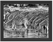 Gerahmtes Wandbild Zebras Safari Afrika