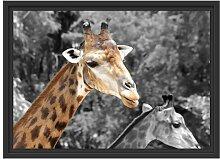 Gerahmtes Wandbild zwei schöne Giraffen