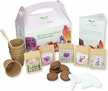 Geschenk Anzuchtset: Blütenzauber 5 Kontinente Box/zum Selberzüchten oder zum Verschenken/eine originelle Geschenkidee für praktisch jeden Anlass