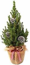 Geschmückter Weihnachtsbaum Zuckerhutfichte Picea
