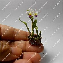 GETSO 100 PC/Bag Mini-Orchideen