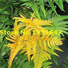 GETSO 200pcs Mehrfarben Fern Pflanzen Chilean