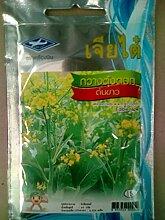 GETSO Samen-Paket: 4350 Samen Essbare Rape Thai