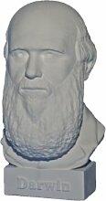 gipsnich Büste Darwin, Charles