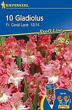 Gladiole Fr. Coral Lace | Gladiolenzwiebeln von