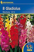 Gladiole Mischung | Gladiolenzwiebeln von