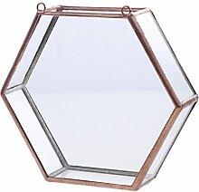 Glas geometrische Terrarium Box Sukkulent Pflanze
