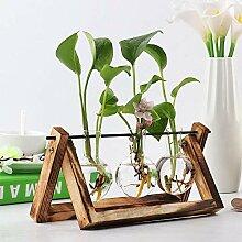 Glas klar Zwiebel Vase Pflanze Terrarium mit