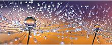 GLASBILD Blumen SOFT DANDELION VIII