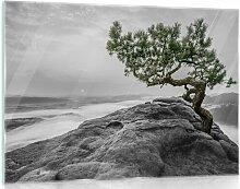 Glasbild Der Baum Auf Dem Felsen in