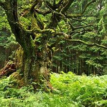Glasbild Der Baum, Kunstdruck Alpen Home