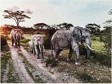Glasbild Elefant Family KARE Design