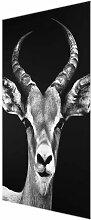 Glasbild Impala-Antilope in Schwarz/Weiß East