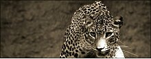 Glasbild Leopard, Kunstdruck East Urban Home
