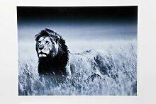 Glasbild Lion King in Grau KARE Design