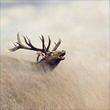Glasbild Lonely Deer, Fotodruck Alpen Home