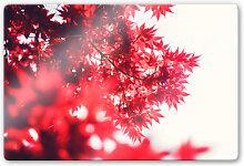 Glasbilder - Glasbild Ahornbaum im Herbst