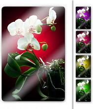 Glasbilder - Glasbild Blütenpracht einer Orchidee