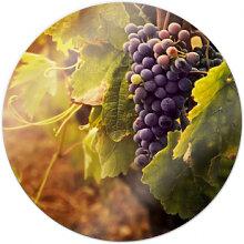 Glasbilder - Glasbild Toskanische Weinrebe - rund