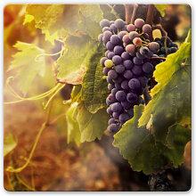 Glasbilder - Glasbild Toskanische Weinrebe