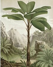 Glatte Fototapete Banana Tree 1,8 m x 1,43 m KEK