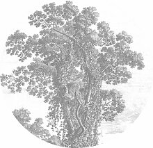 Glatte Fototapete Engraved Tree KEK Amsterdam