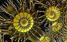 Glorious.Q Kinderzimmer Fototapete,Goldene Blumen