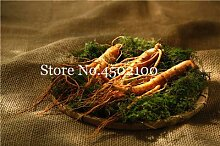 Go Garden 100 Pcs Chinesischer Ginseng-Bonsai,