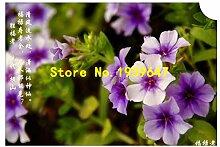 Go Garden 100pcs 6 Arten Bonsai Phlox-Samen 100%