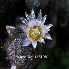 Go Garden 100pcs Feigenkaktus Samen Mastoid Blume