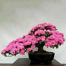 Go Garden 10pcs / bag Japanische Azalee Samen,