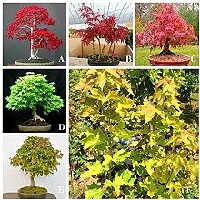Go Garden 20 Samen: Imported amerikanische Rote
