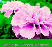 Go Garden 200 100% ree Rose Pink Farbe