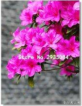 Go Garden 200pcs / bagJapanese Azalee Samen,